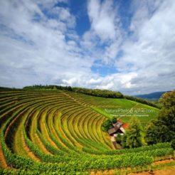 La Vie dans les Vignes