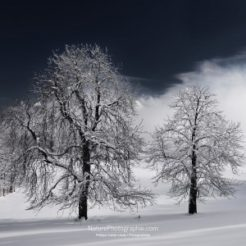 Blanche Nature