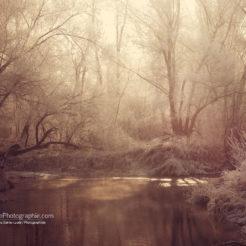 Mystique Forêt