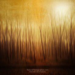 Forêt Fantôme
