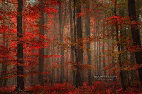 Rouge Enchanteur