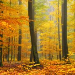 Orton Forêt