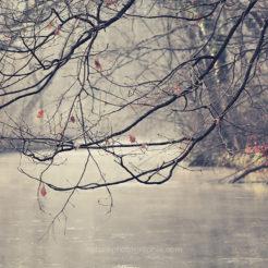 Début d'hiver