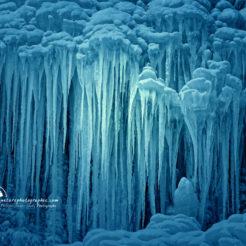 Méduses de glace