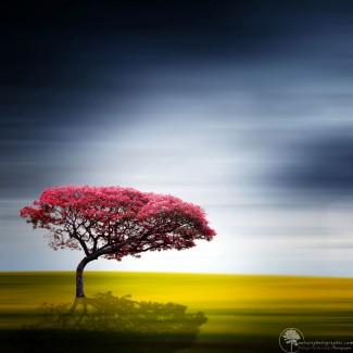 Un arbre minimaliste