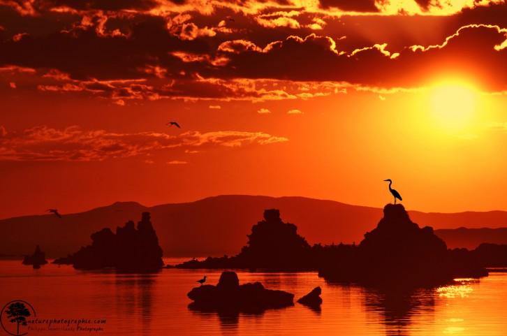 Oiseaux sur Mono Lake