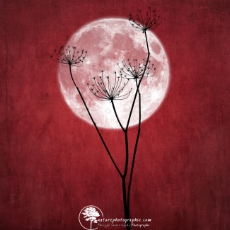 Give me the moon