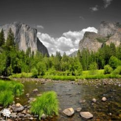 Yosemite evergreen