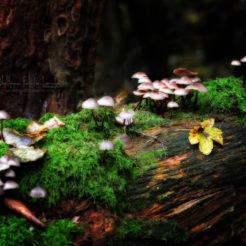 La vie dans les bois