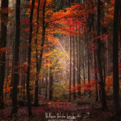 Orton Wood