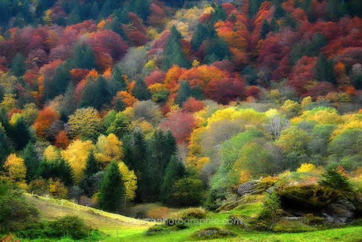 automne-post-2