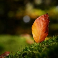 Best of automne 2012