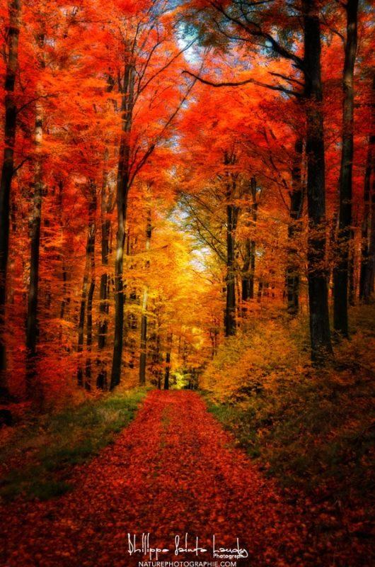 Forêt Jardin
