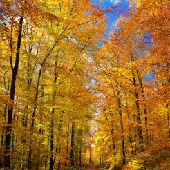 Un chemin en automne
