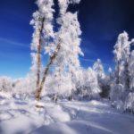 Blanc manteau
