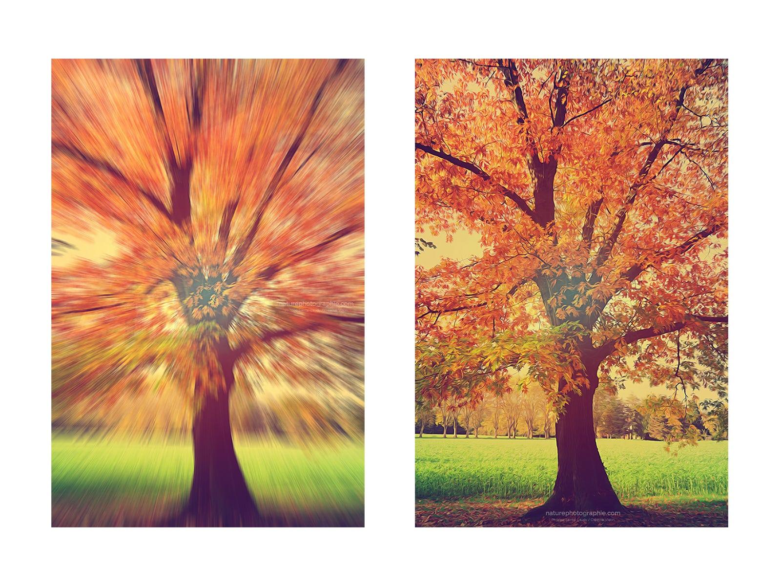 Paintography un effet artistique entre peinture et - Photo effet peinture ...
