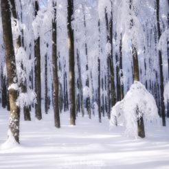 La photographie en hiver