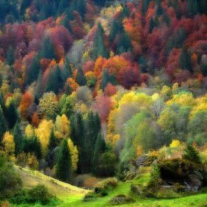 Palette Nature