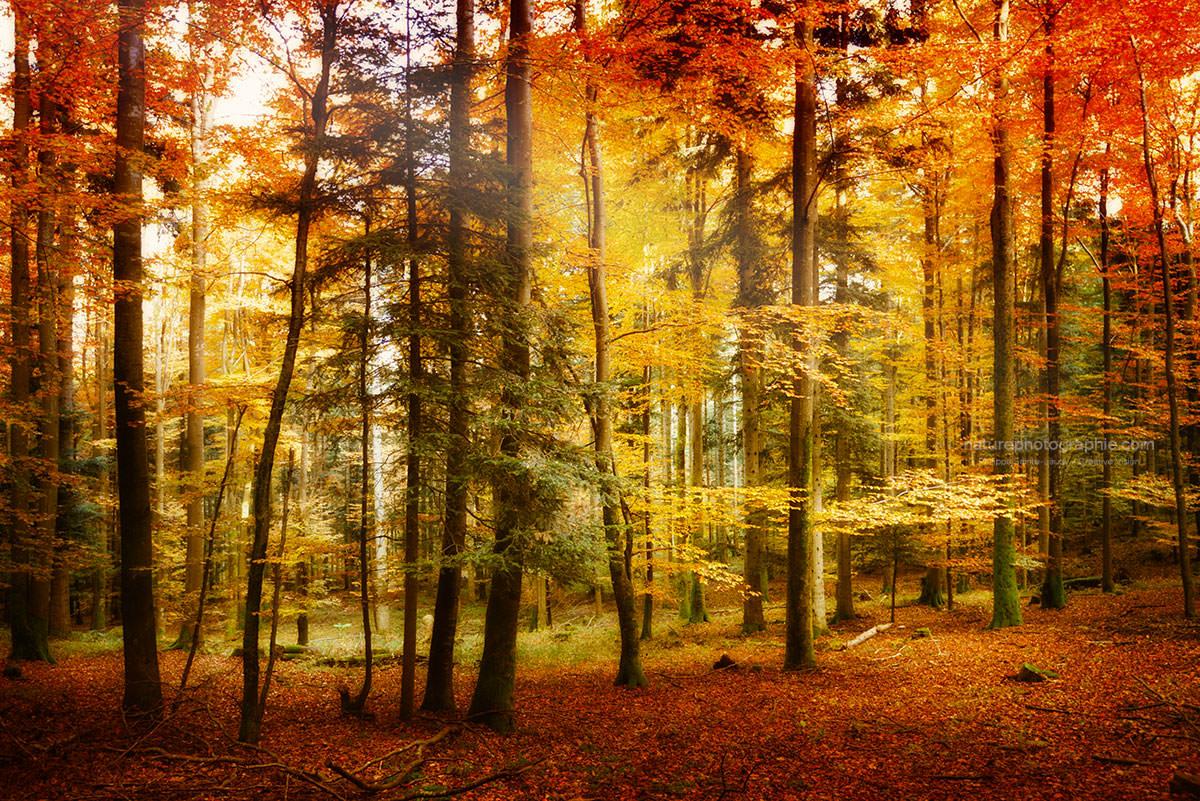 Brillant automne nature photographie - Images d automne gratuites ...
