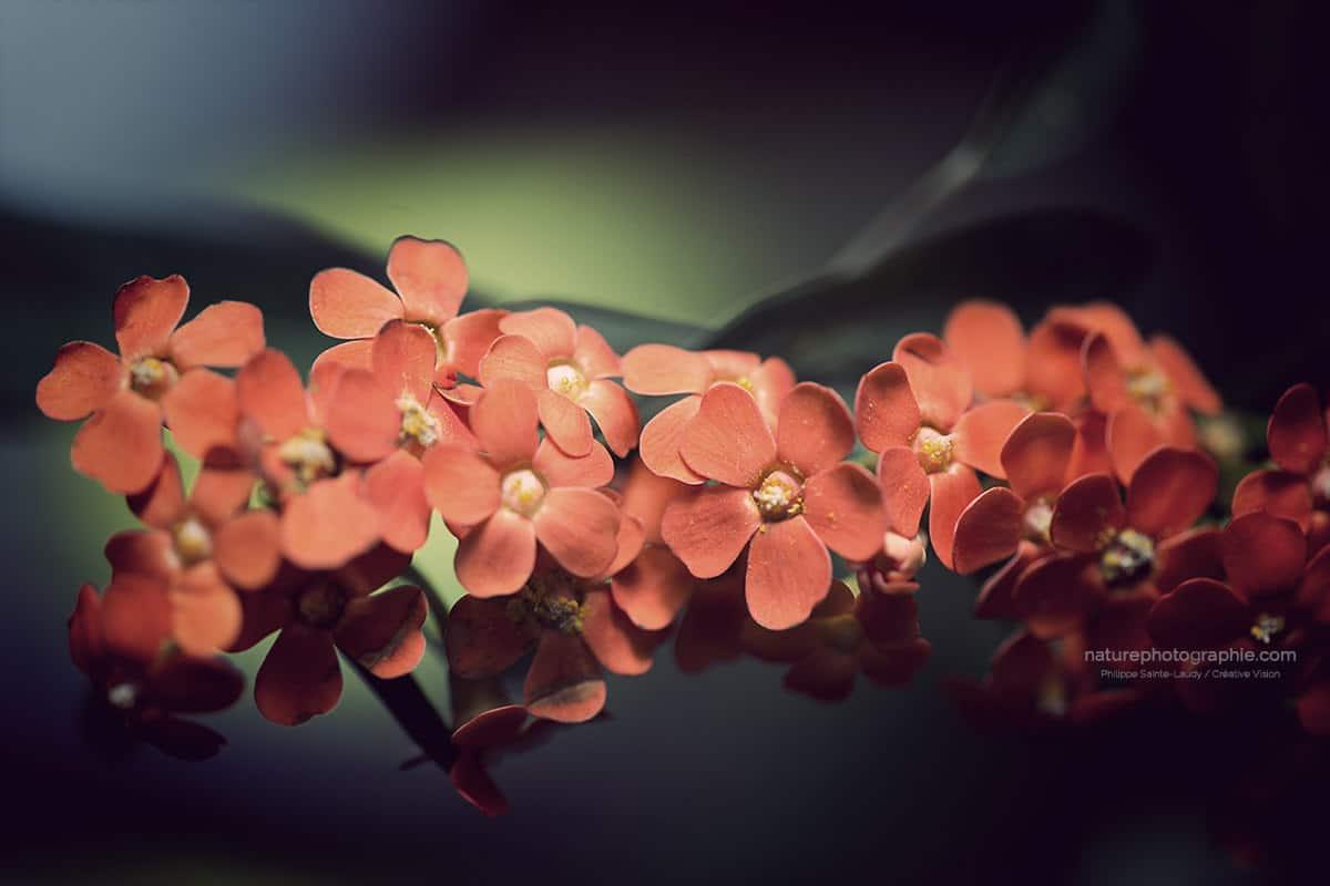 Fleurs en attente