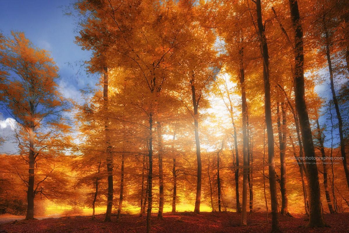 Jaune automne