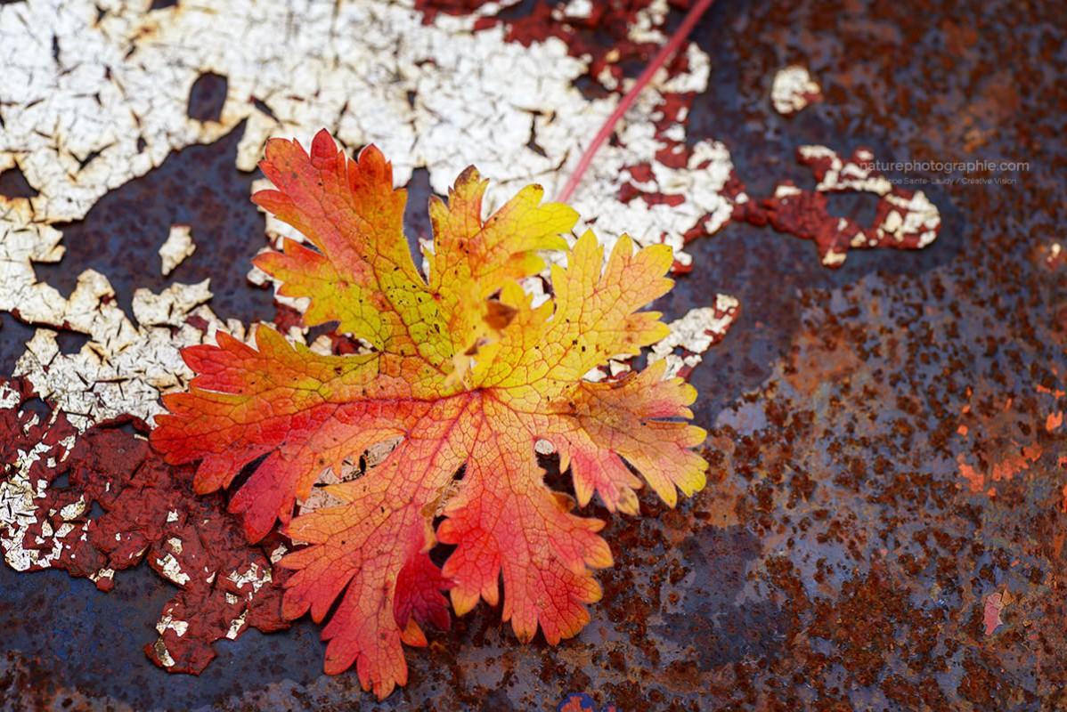 Rouille automne