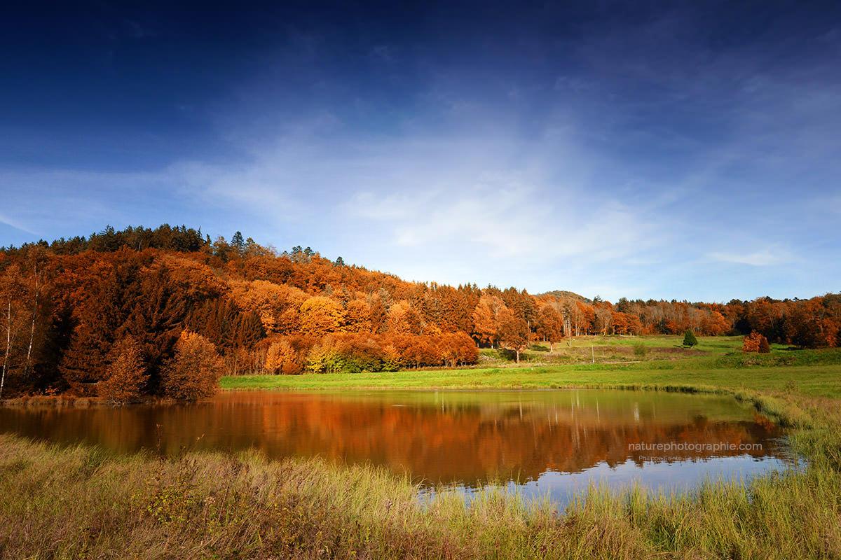 Vosges Automne