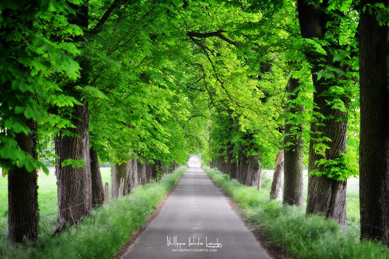 All e verte nature photographie for Entretien jardin printemps