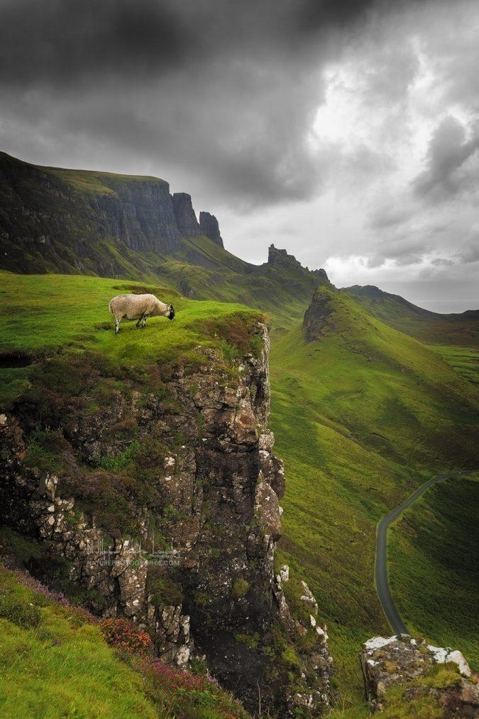 Un mouton sur le site de Quiraing en Écosse.
