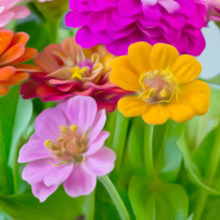 Photos de fleurs - Bouquet de zinnias