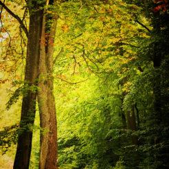 Derniers verts de la saison