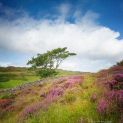 La flore sur l'Île de Skye