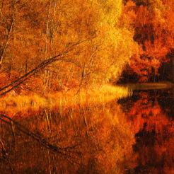 Ma couleur favorite est octobre