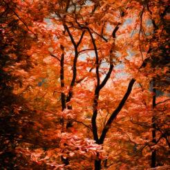 Caresse d'automne