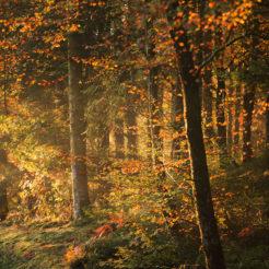 Mémoire de la forêt
