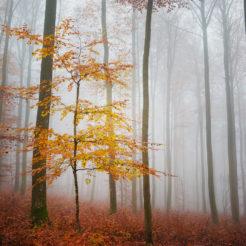 Photos de forêt dans le brouillard