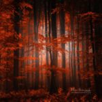 Automne. Forêt rouge en Alsace