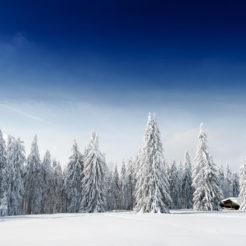 Habillés pour l'hiver