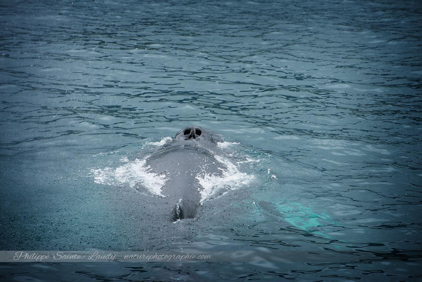 Baleine 6