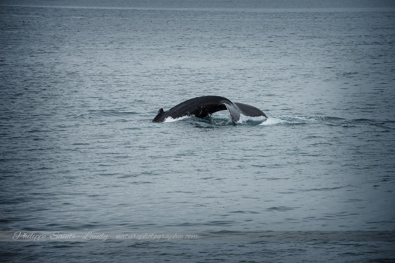Baleine 9