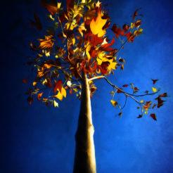 Automne bleu en paintography