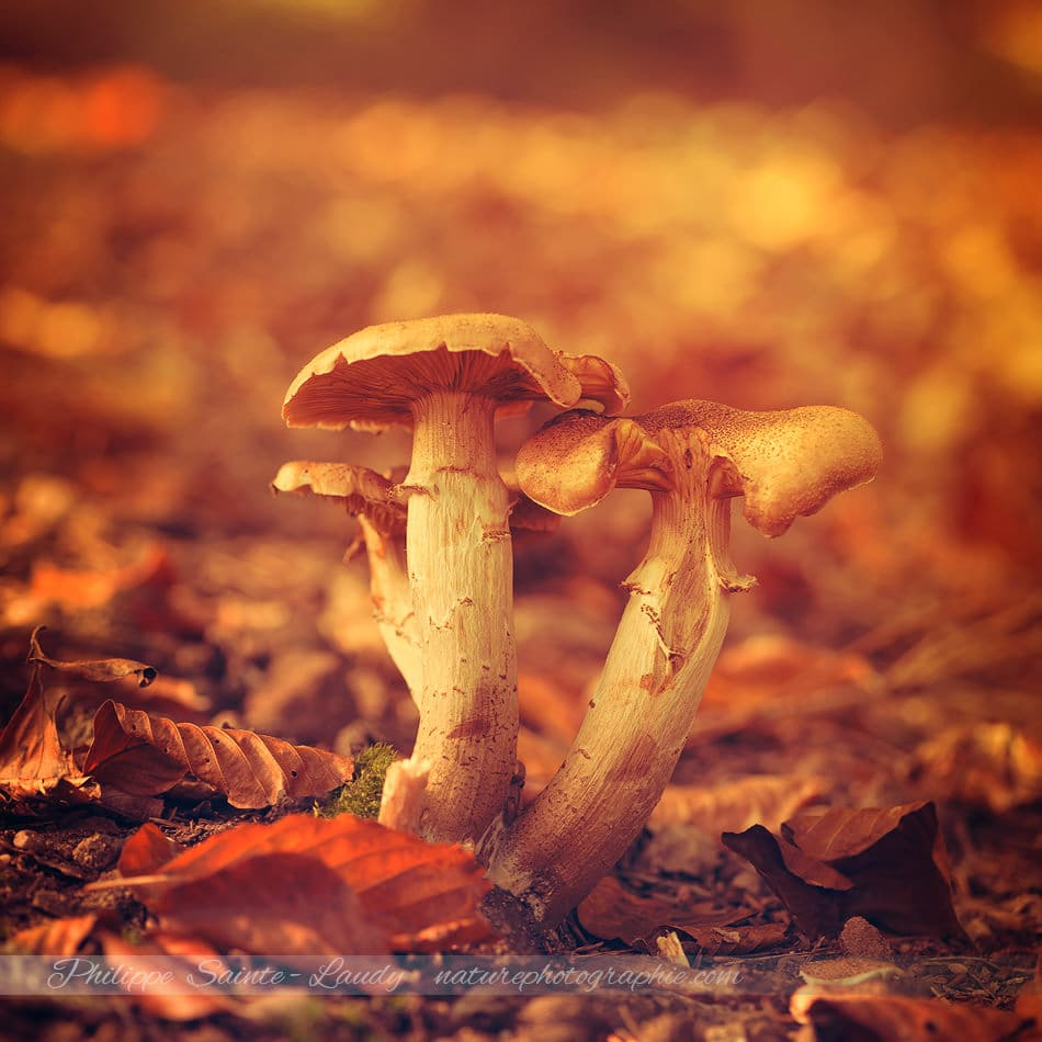 Champignons en automne