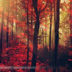 Quelques couleurs d'automne