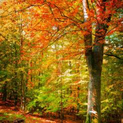 Pourquoi les feuilles changent de couleur à l'automne ?