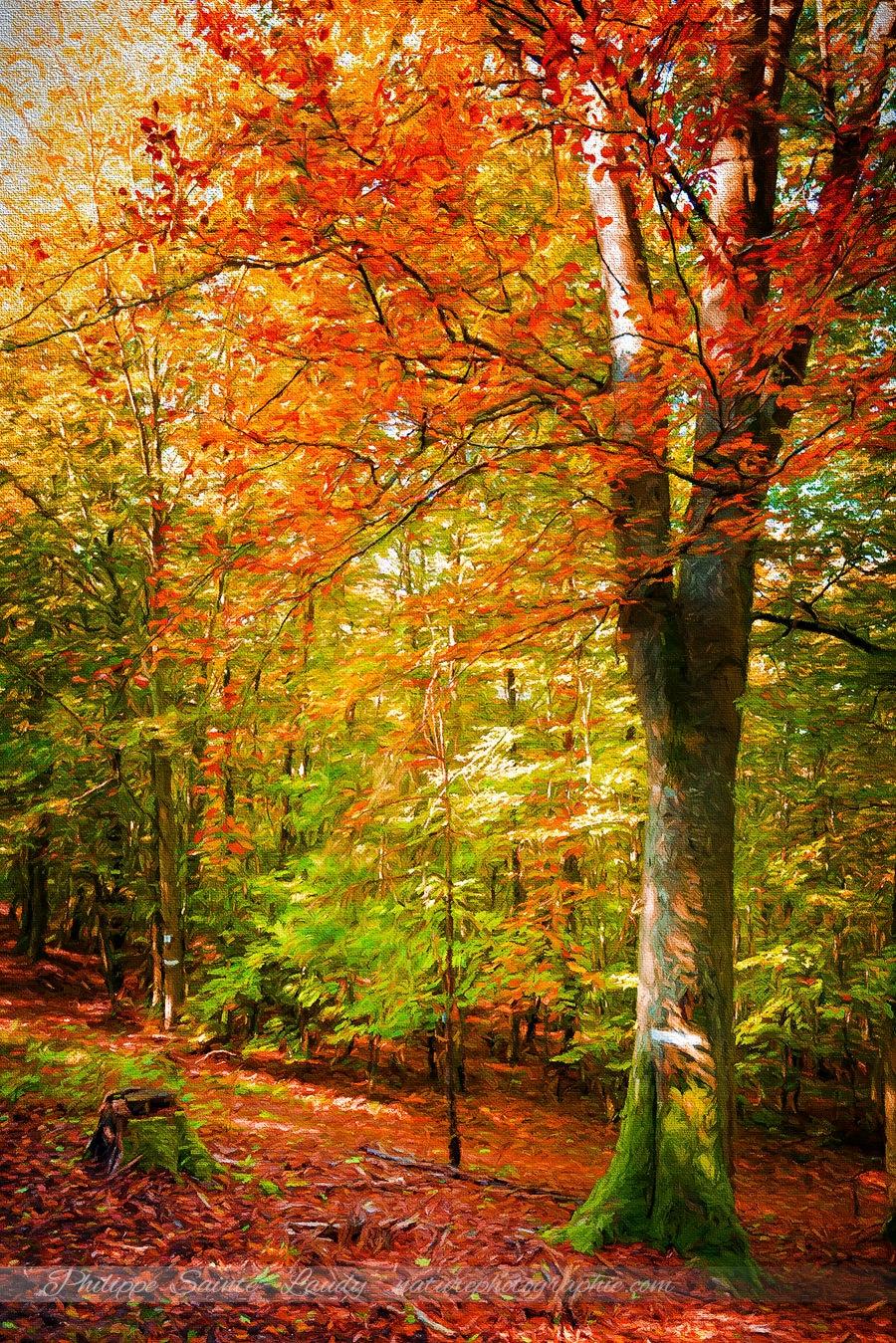 pourquoi les feuilles changent de couleur l 39 automne. Black Bedroom Furniture Sets. Home Design Ideas
