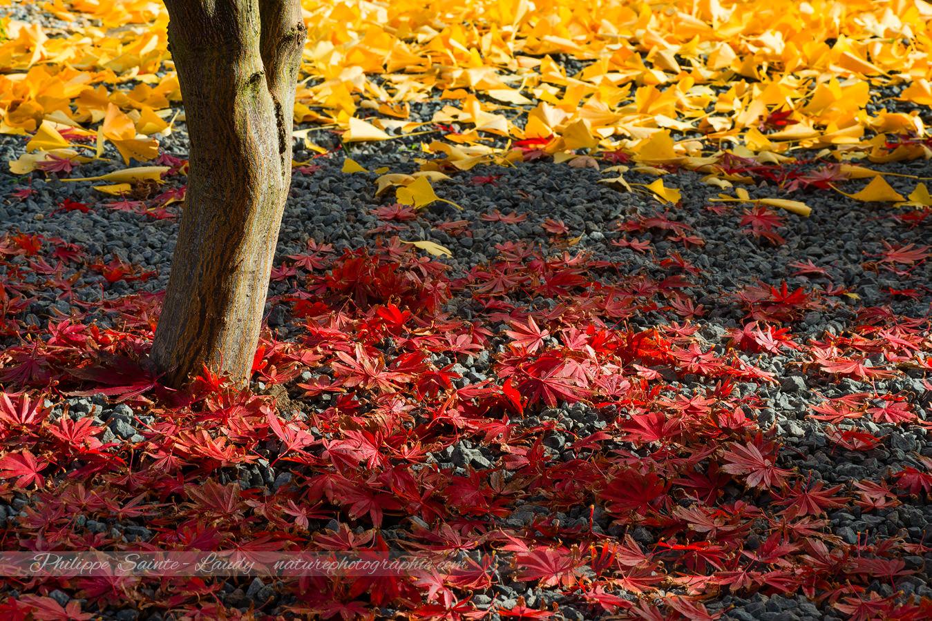 Autumnal Line