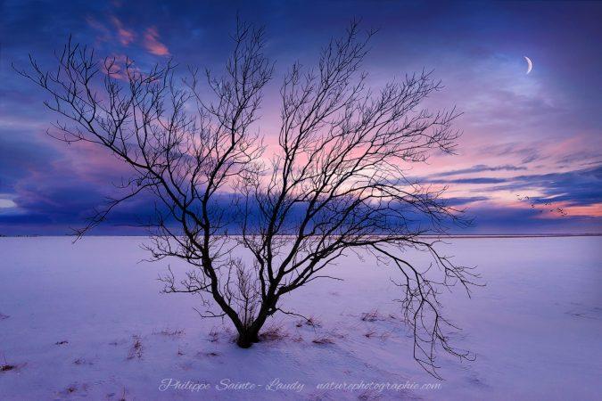 Arbre en hiver au coucher du soleil en Islande