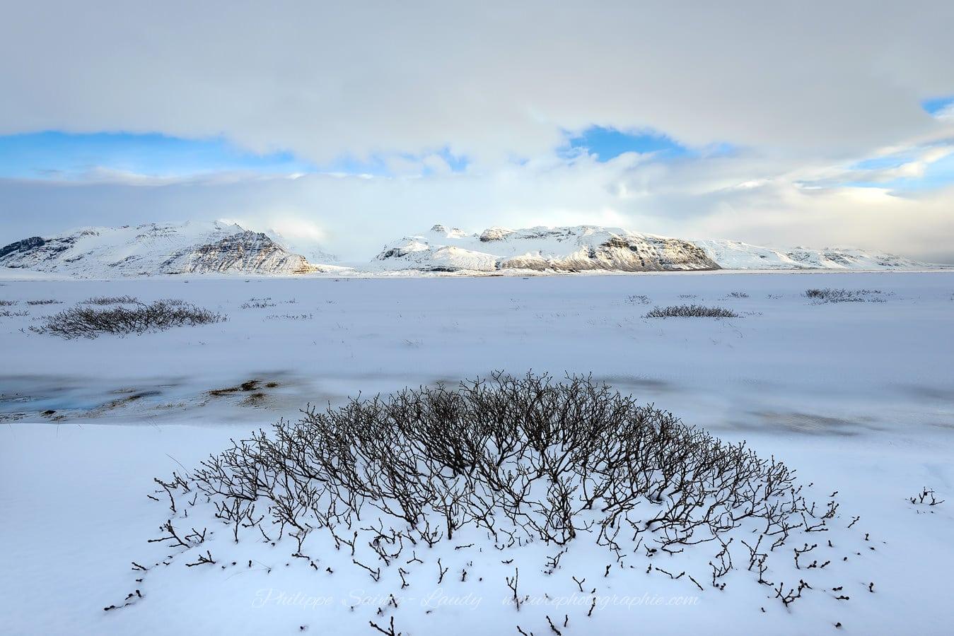 White Icelandic