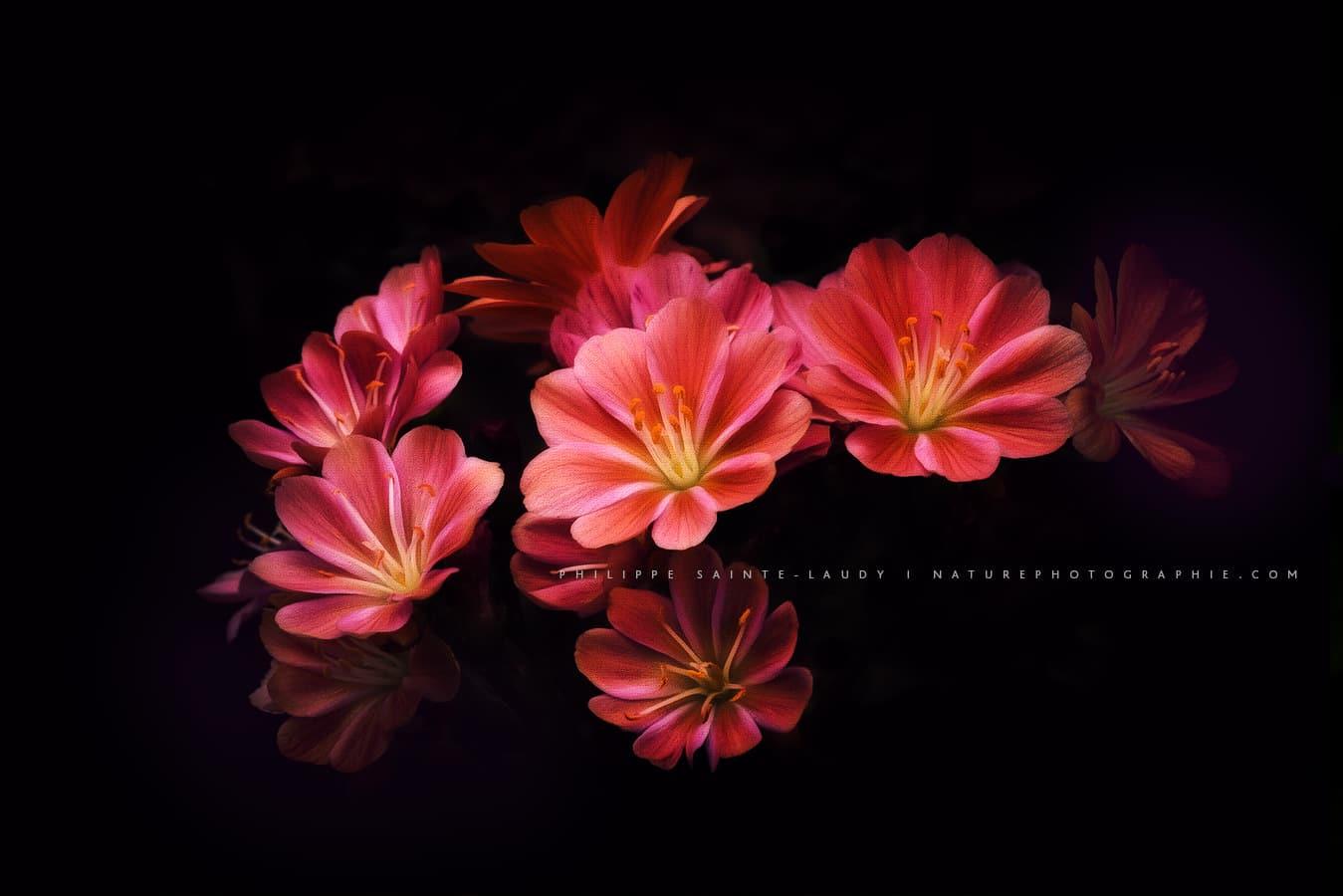 Photos de fleurs rouge