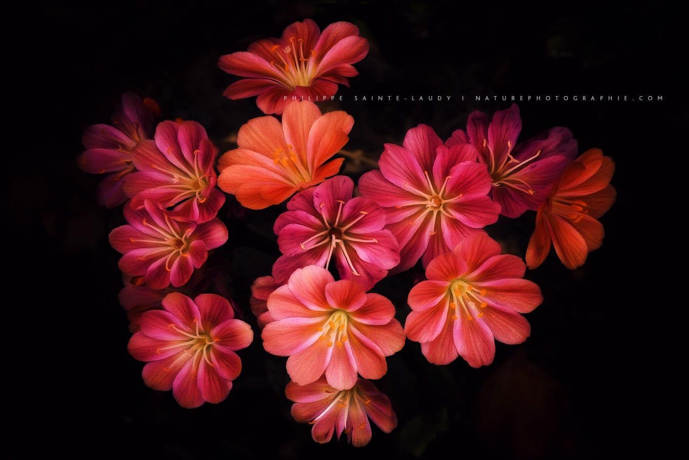 Fleurs et paintography
